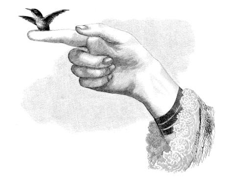 Bolles Köche - Vogel auf der Hand