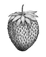Bolles Köche - Erdbeere Icon