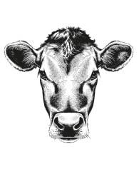 Bolles Köche - Kuh Kopf